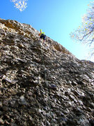 Rock Climbing Photo: Becky fixing the anchors on Massengile the Moose.