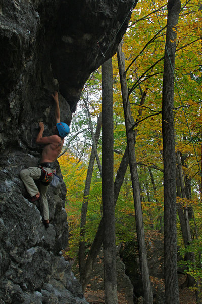 Rock Climbing Photo: Zagy cleaning in a sea of gold