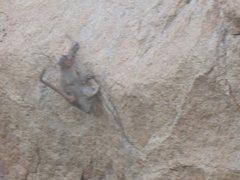 Rock Climbing Photo: monkey 1
