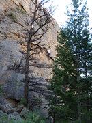 Rock Climbing Photo: Matt working out the cruxish area.