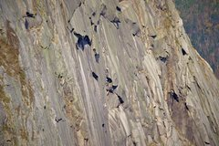 Rock Climbing Photo: Climbers on the Big Wall of Cannon Cliff - view fr...