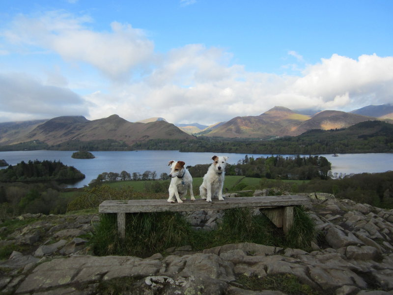 Terriers in Lake District UK