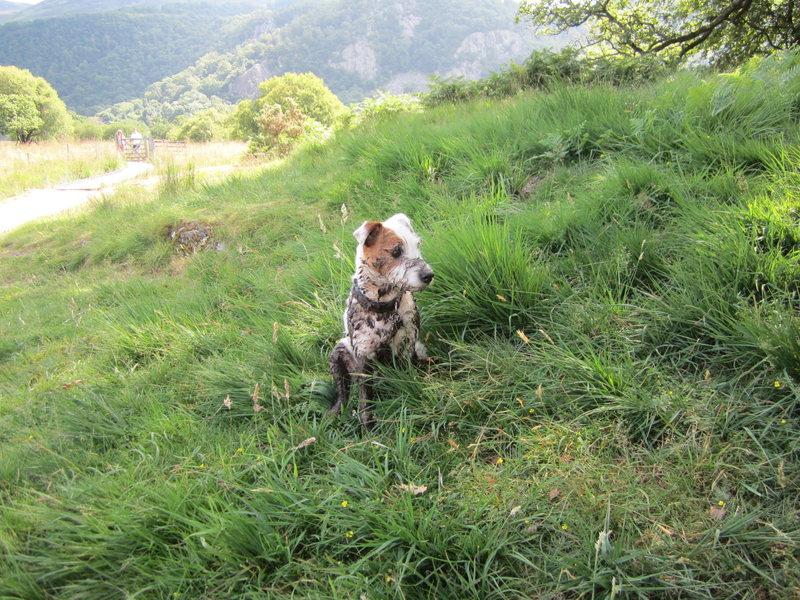 Rock Climbing Photo: Dirty Dog