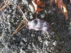 Rock Climbing Photo: Victim of ground fall?