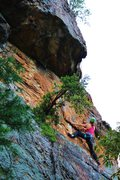 Rock Climbing Photo: Following and cleaning Rediscovery (5.8) trad at C...