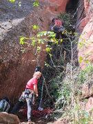 Rock Climbing Photo: Cedar climbs the vines on P1