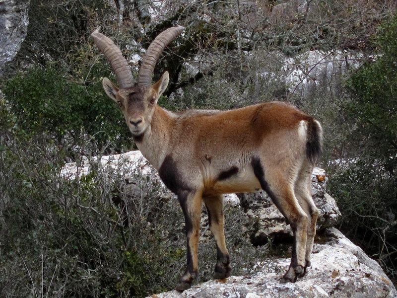 Rock Climbing Photo: Ibex in El Torcal