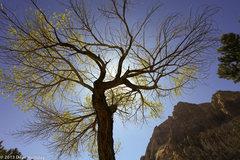 Rock Climbing Photo: Hiking into Oak Creek Canyon.
