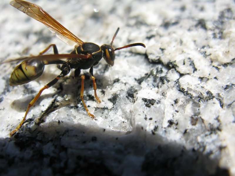 Rock Climbing Photo: LCC wasps