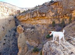 Rock Climbing Photo: Fetch...on Guy Fawkes day.