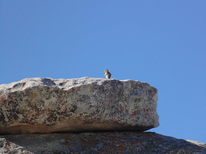 Rock Climbing Photo: Chipmunk