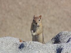 Rock Climbing Photo: My buddy!