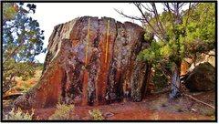 Rock Climbing Photo: Feral Funk is in orange.