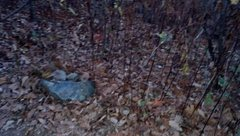 We built this small cairn to mark the otherwise barely detectable trail-head to the Reflector Oven.  It sits close to the more permanent three-trunk tree.