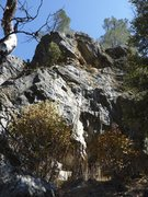Rock Climbing Photo: Poisonous Pendulum is to the left of the bushes an...