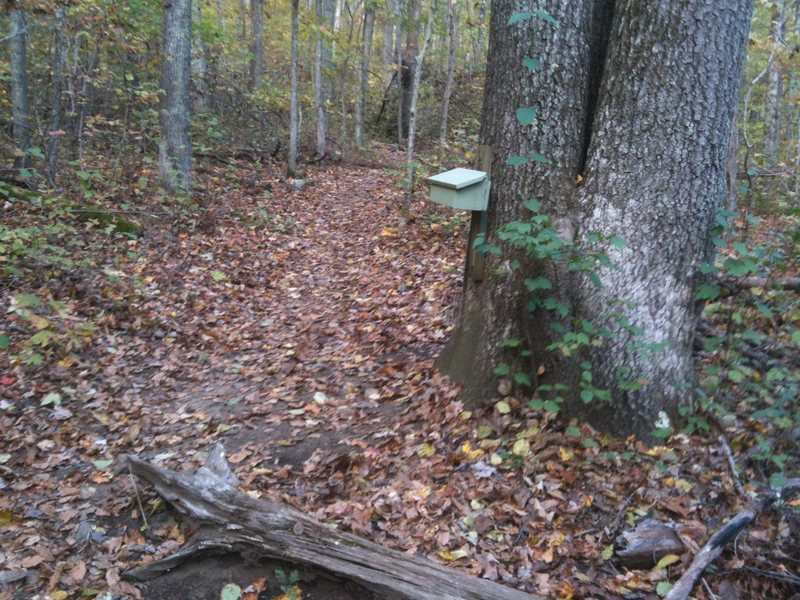 The trail to the Lower Ledges is on the left, just past this trail map box.