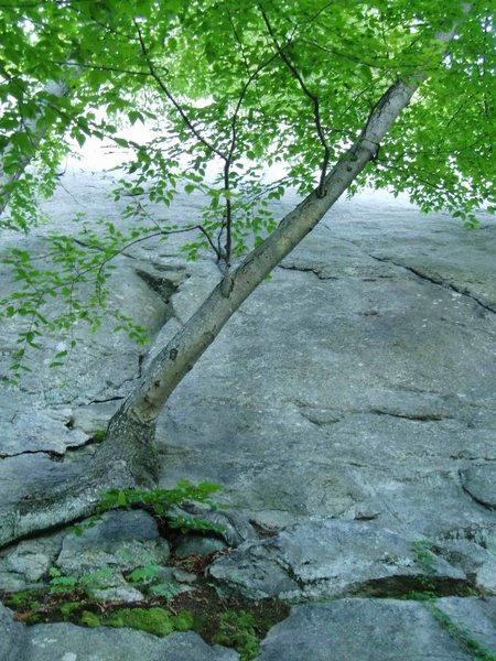 Rock Climbing Photo: My (summer time) photo of the climb I've called &q...