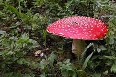 Rock Climbing Photo: Fly Agaric
