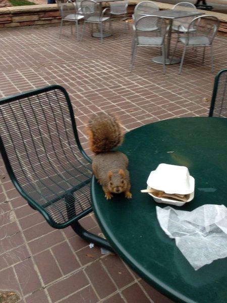 Campus wildlife.