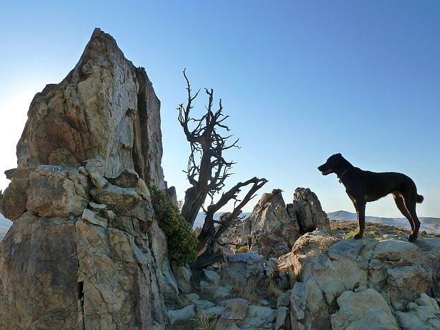 Rock Climbing Photo: Tala at the Luna Boulders, San Bernardino Mountain...