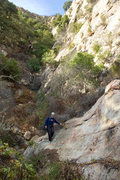 Rock Climbing Photo: Nicole descends the gully below the Fun in the Sun...