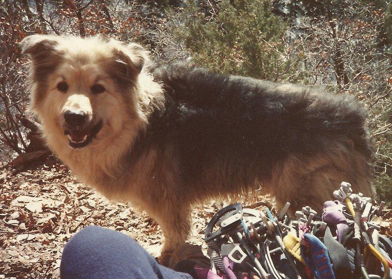 Rock Climbing Photo: Good dog.
