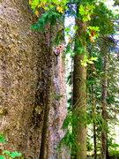 Rock Climbing Photo: Nick Layton