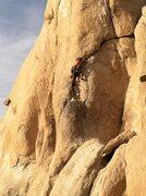 Rock Climbing Photo: Steve Thomas on Dandelion.