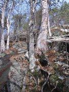 Rock Climbing Photo: Singed