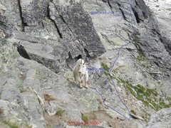 Rock Climbing Photo: GOAT TRAIL