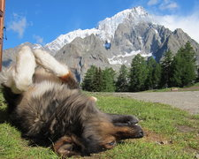 A very friendly pup at a refugio with Mt. Blanc in the background