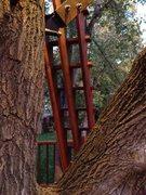 Rock Climbing Photo: a ladder