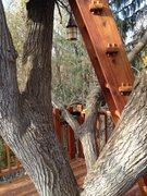 Rock Climbing Photo: Building around branches