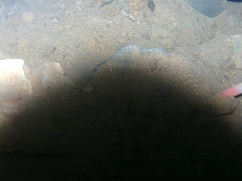 Picture of some underwater stuff taken with just the camera submerged half a foot .  Depth 3 ft.