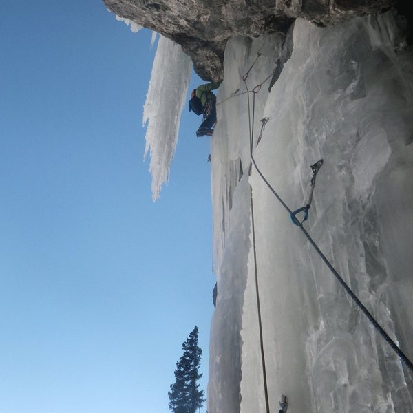 2nd pitch of Talisman. Fat this year. <br> <br> Photo: Pat McCarthy, December 2013.