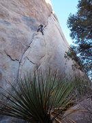 Rock Climbing Photo: Jackson on-sighting Illusion Dweller.
