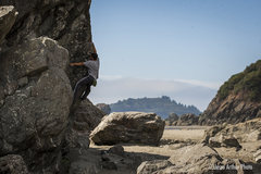 Rock Climbing Photo: Crushing at Moonstone