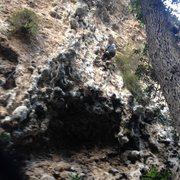 Rock Climbing Photo: Butt shot