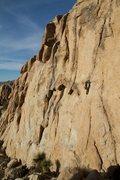Rock Climbing Photo: Cake Walk, J Tree