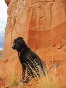 Rock Climbing Photo: Chaco and the Bandit