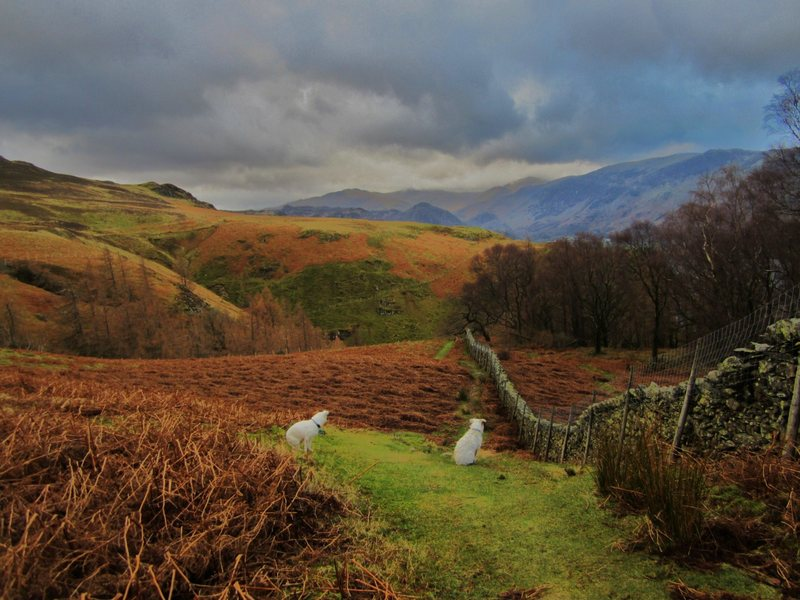 Hiking on Walla Crag .Looking up to the head of the Borrowdale Valley