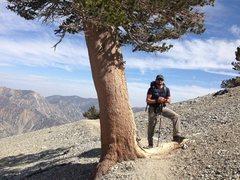Rock Climbing Photo: Anthony Vito Fiore - Mount San Antonio - Ascent.