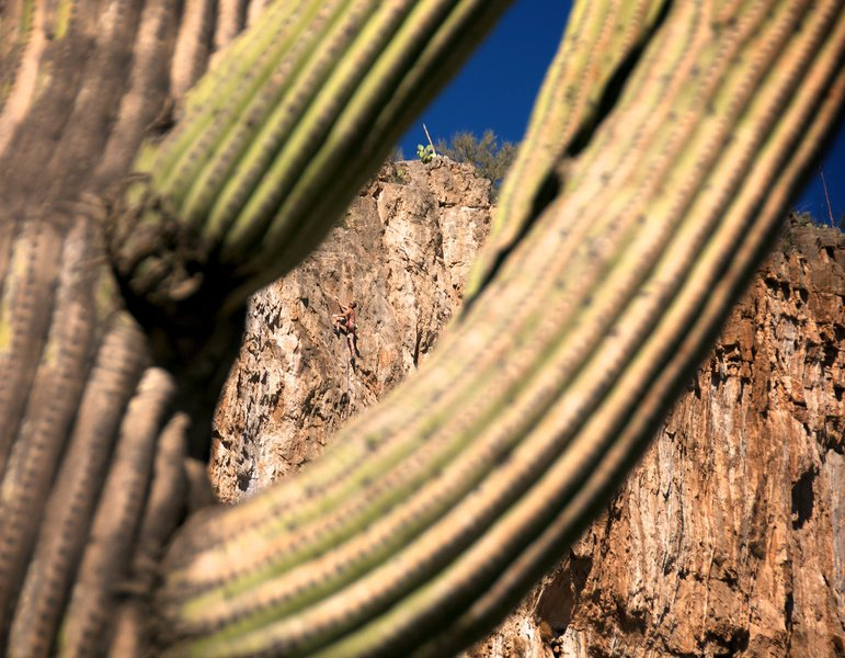 Ed framed by the saguaro on his onsight of the route in late December 2013.