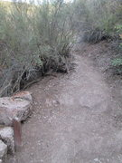 Rock Climbing Photo: climber's trail from Moses Springs Trail to Marmot...