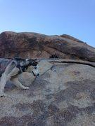 Rock Climbing Photo: Odessa at the second bolt
