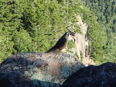 Rock Climbing Photo: peregrine falcon. I think he is a young one, maybe...