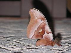 Rock Climbing Photo: Mothra!!