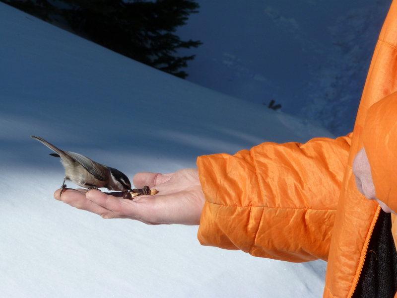 Rock Climbing Photo: Mountain Chickadee