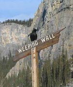 Rock Climbing Photo: Raven