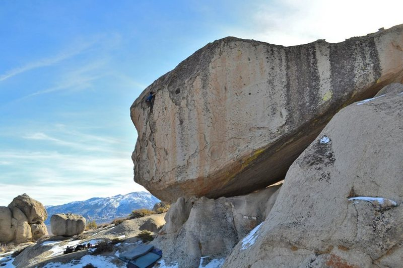 Topping out the Mead boulder in the Pollen Grains, Bishop, CA.